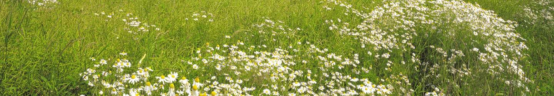 Prairie & herbe