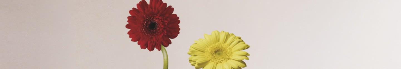 Stickers muraux Fleurs & Animaux