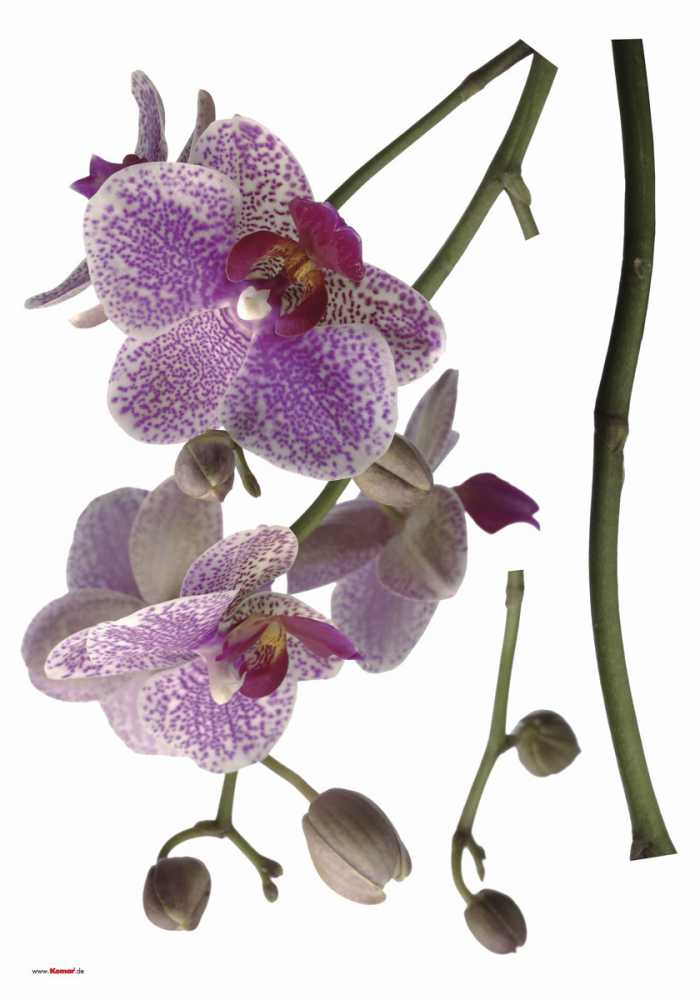 Sticker mural Orchidee