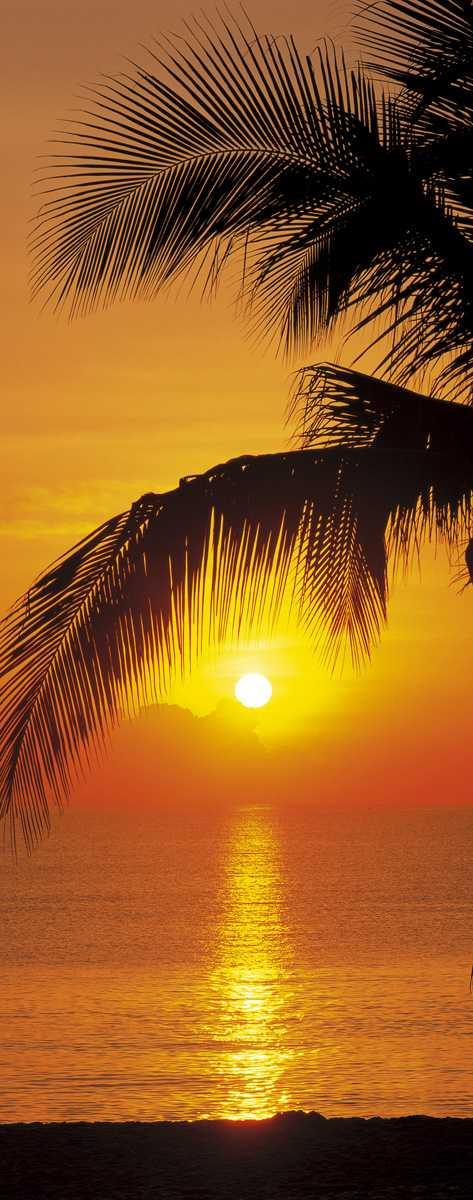 Photo murale Palmy Beach Sunrise