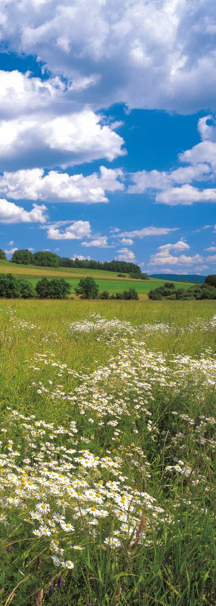Panneau sur intissé  Meadow