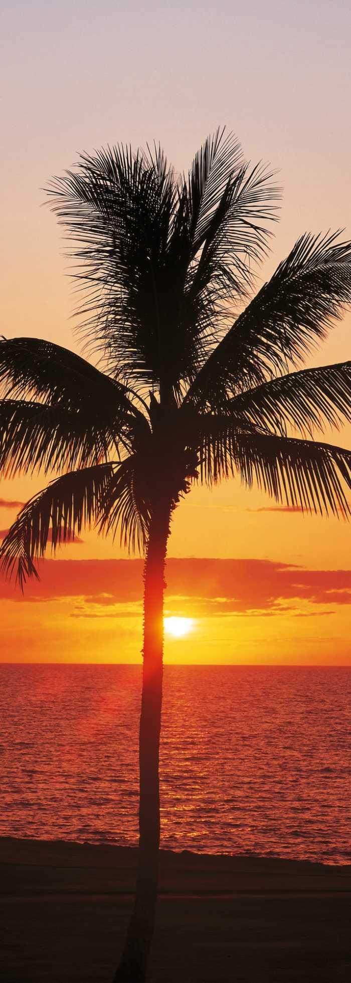 Panneau sur intissé  Hawaii