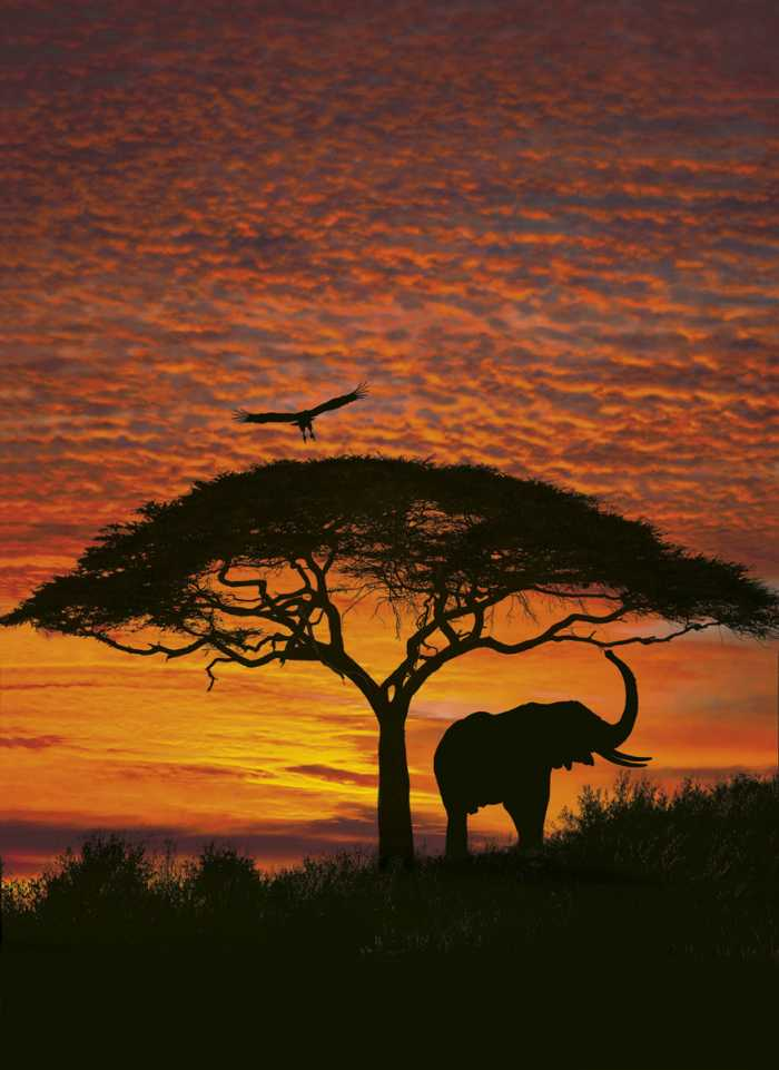 Photo murale African Sunset