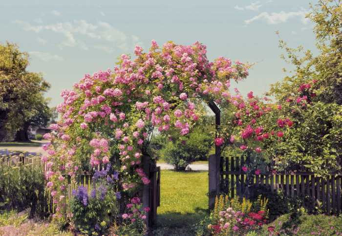 Photo murale Rose Garden