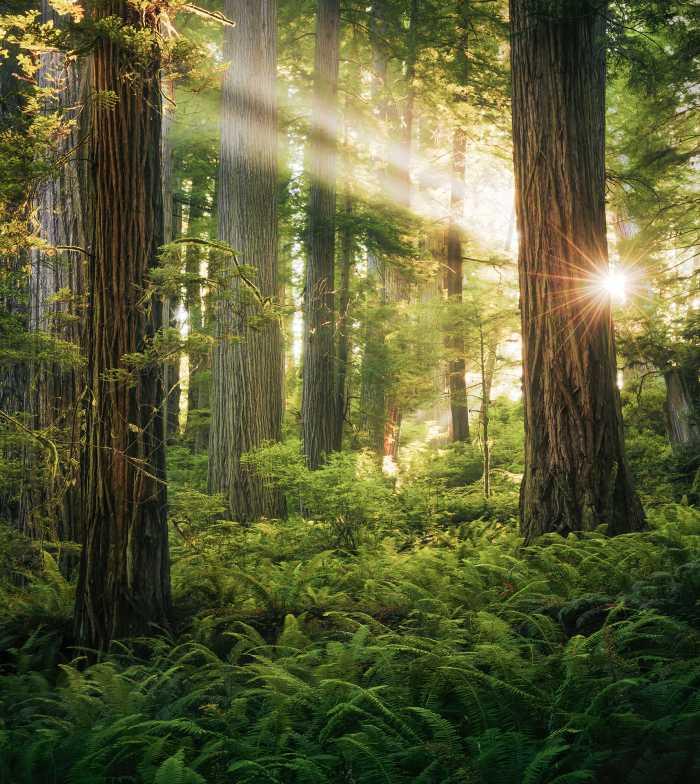 Poster XXL impression numérique Goblins Woods