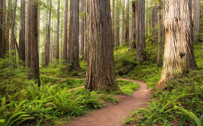 Poster XXL impression numérique Redwood Trail