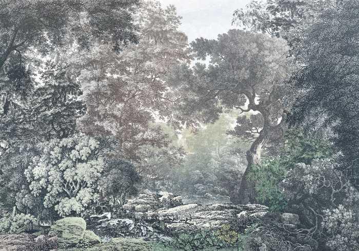 Poster XXL impression numérique Fairytale Forest