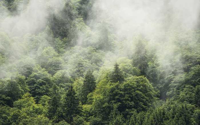 Poster XXL impression numérique Forest Land