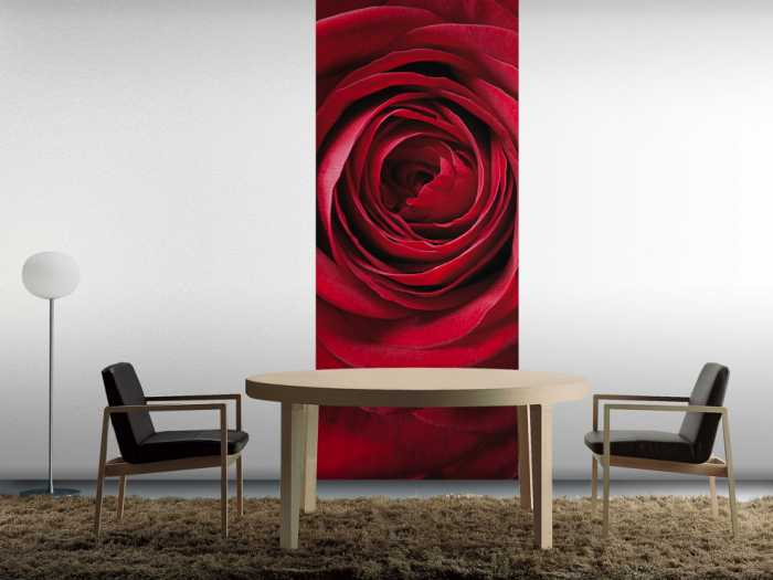Photo murale Red Rose