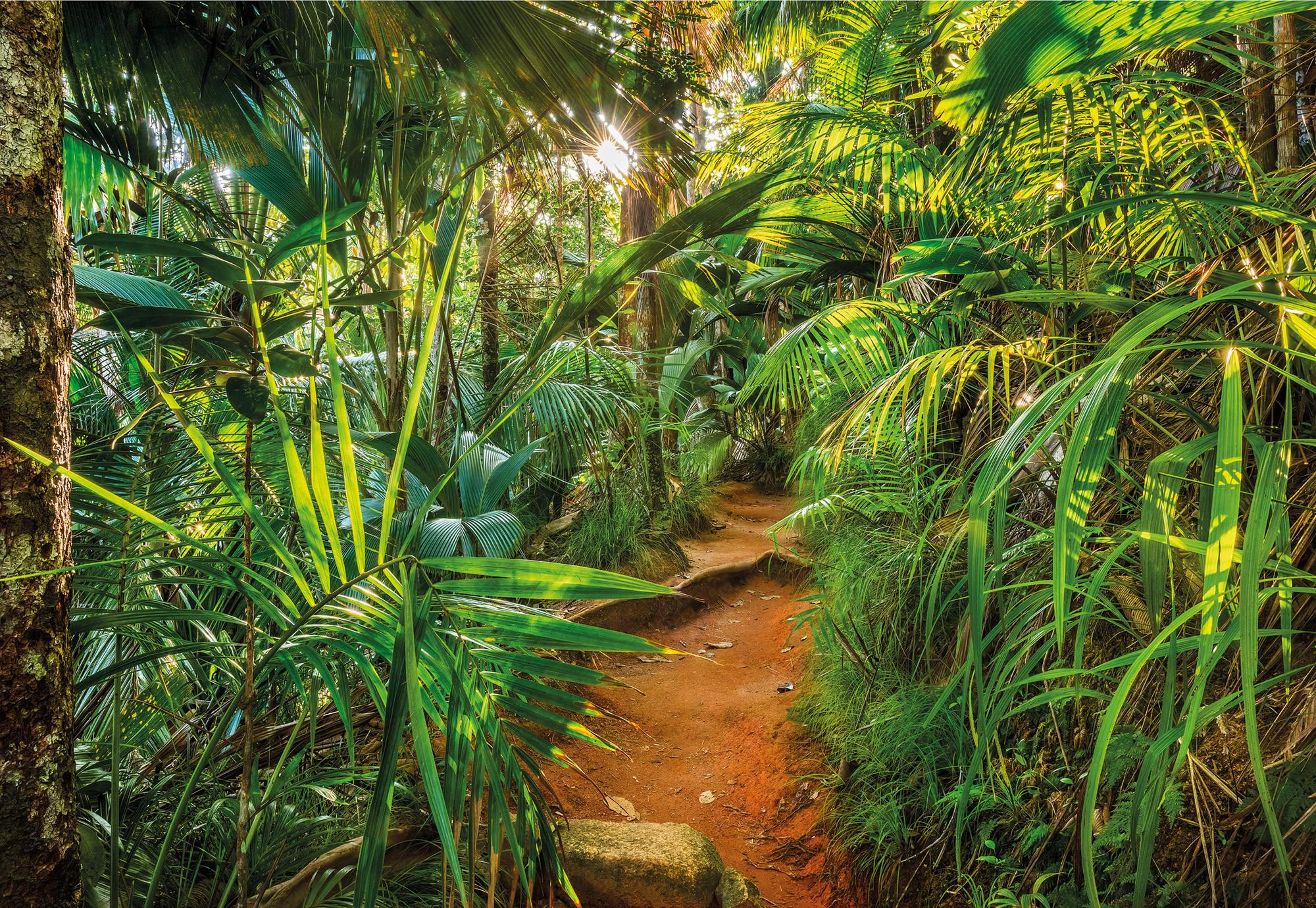 989 Jungle Trail Web Amazon Tapety Palmy
